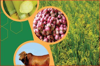 Dinas Pertanian Harus Menjelaskan Susunan Organisasi Kementerian Pertanian